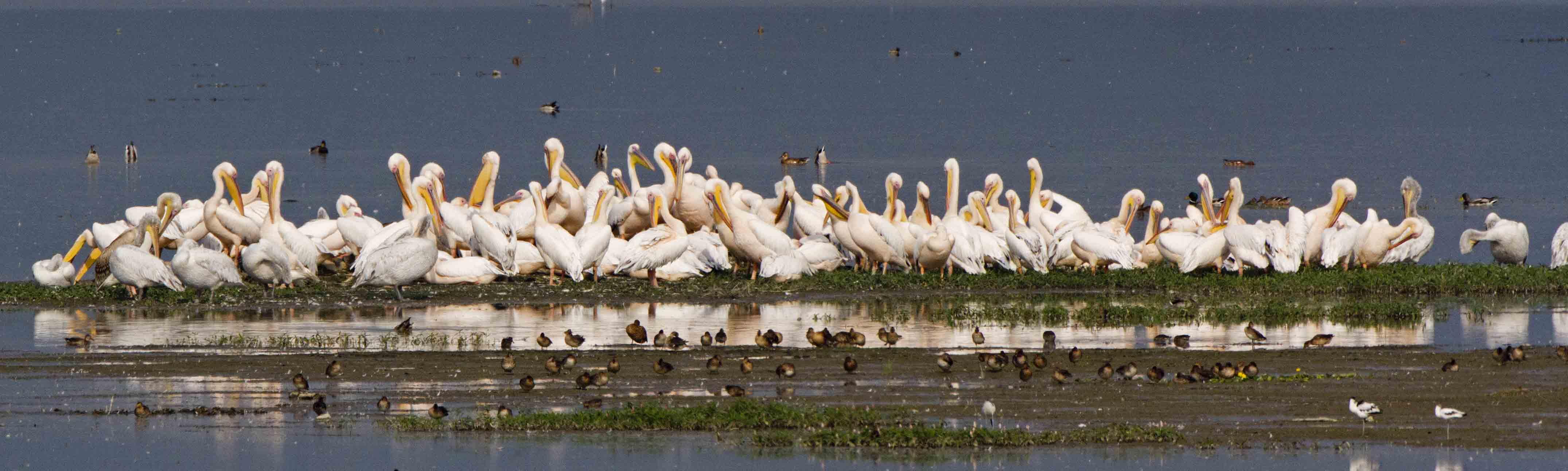 BirdWING (Birdwatching in Northern Greece)